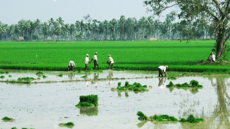 Best Rice Producing State in India