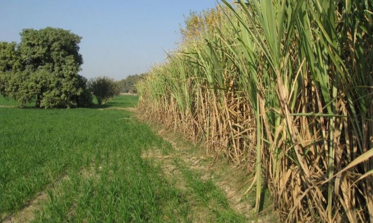 Top sugarcane producing states in India