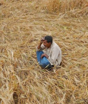 UTTAR PRADESH Top 10 Largest Wheat Producing States in India 2017