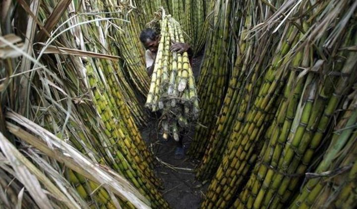 Top 10 Largest Sugarcane Producing States in India 2019 | Trendrr
