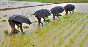 West Bengal Top 10 Largest Rice Producing States in India 2017