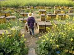 China Top Most Famous Honey Producing Countries 2018