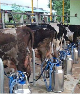 India Top Most Famous Dairy Providing Countries in The World 2018