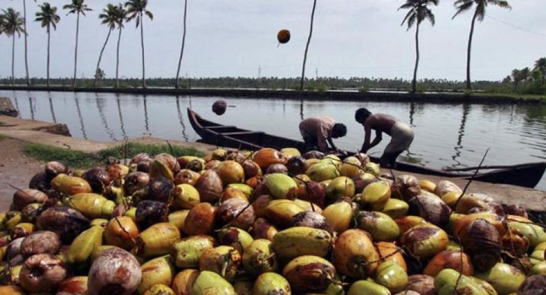 Largest Coconut Producing State in India