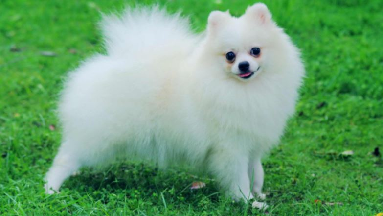 Best Pet Dog Breeds in India