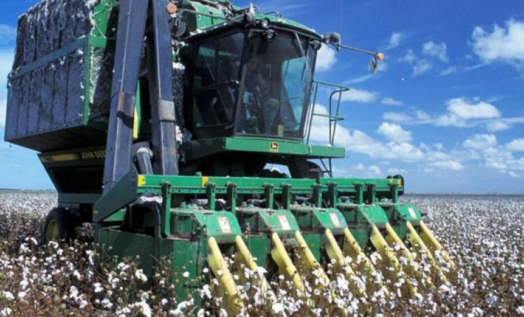 Top cotton producing states in India