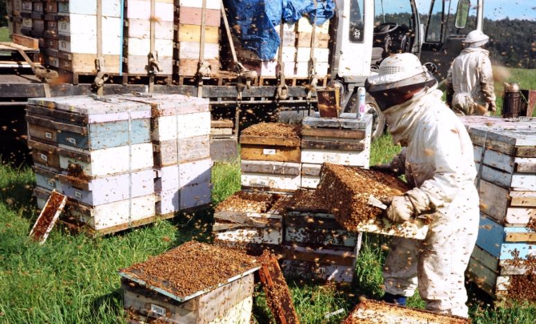 Largest Honey Producing Countries