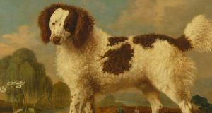 Salish Wool Dog Top Most Famous Extinct Breeds of Dogs 2018