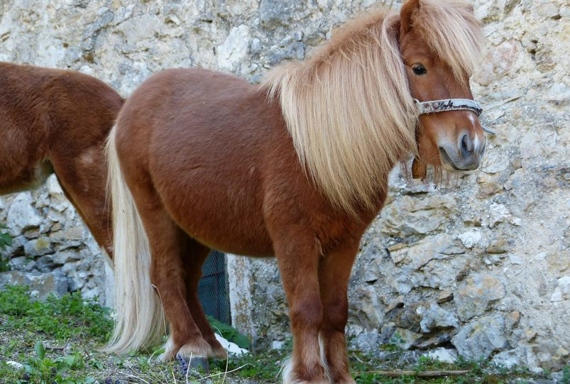 Most Expensive Horse Breeds 2019